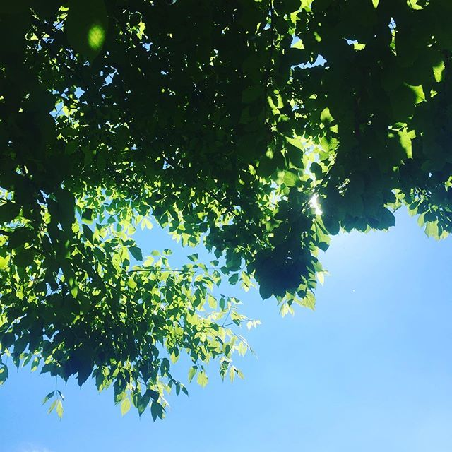 Chilling out under the trees, recharging the batteries before ICFF starts!